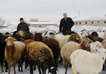 Дубовский фермер решил отстаивать право на земельный участок