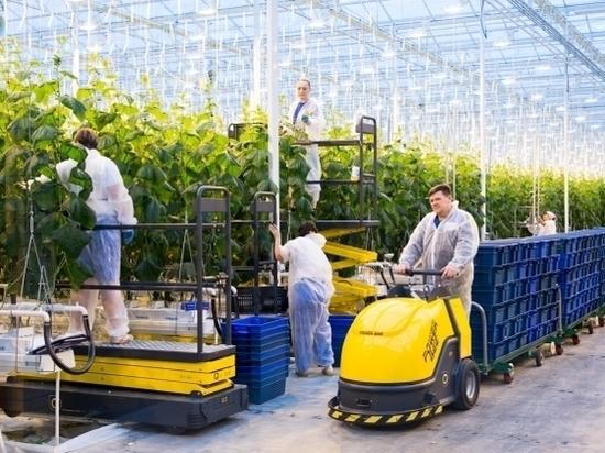 Производство тепличных овощей в Волгоградской области выросло в полтора раза