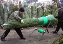 Ели, пихты, пальмы: какие деревья нарядят москвичи к Новому году
