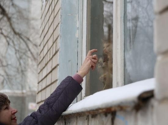 Волгоградка спасает чужих котов и ухаживает за пожилыми земляками