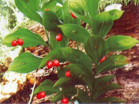 Картинки растений красной книги с названиями 12