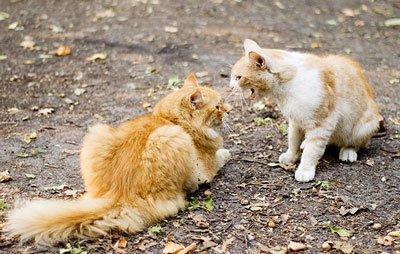 Шведские ученые начали изучать кошачий язык