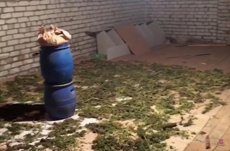 ВВолгоградской области у37-летнего мужчины изъято 42кг марихуаны