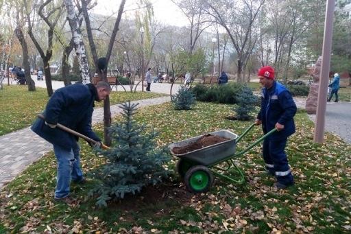 Насевере Волгограда высадили ели, можжевельник, березки исливы