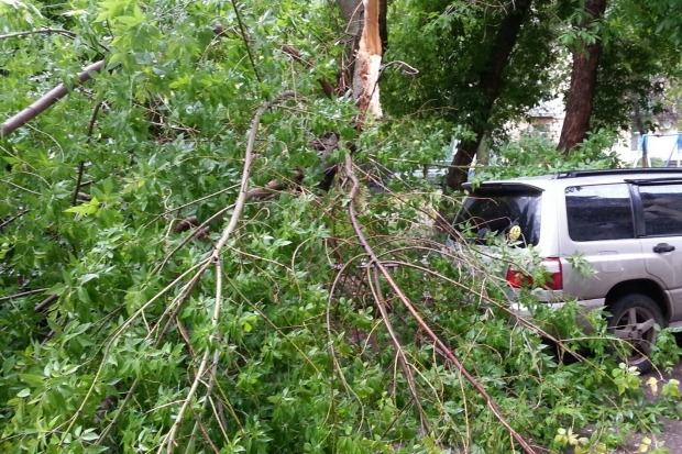 Надве иномарки вцентре Волгограда рухнуло дерево