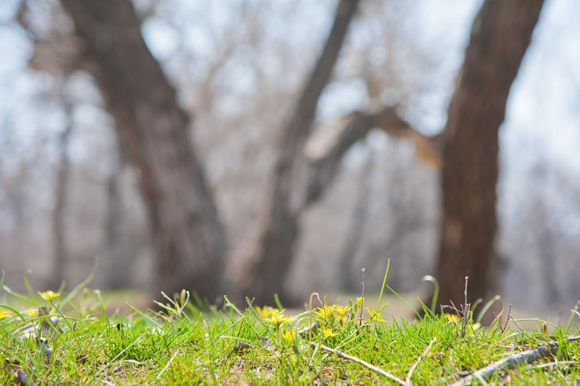 ВКалачевском лесу уничтожен рыжеватый пилильщик