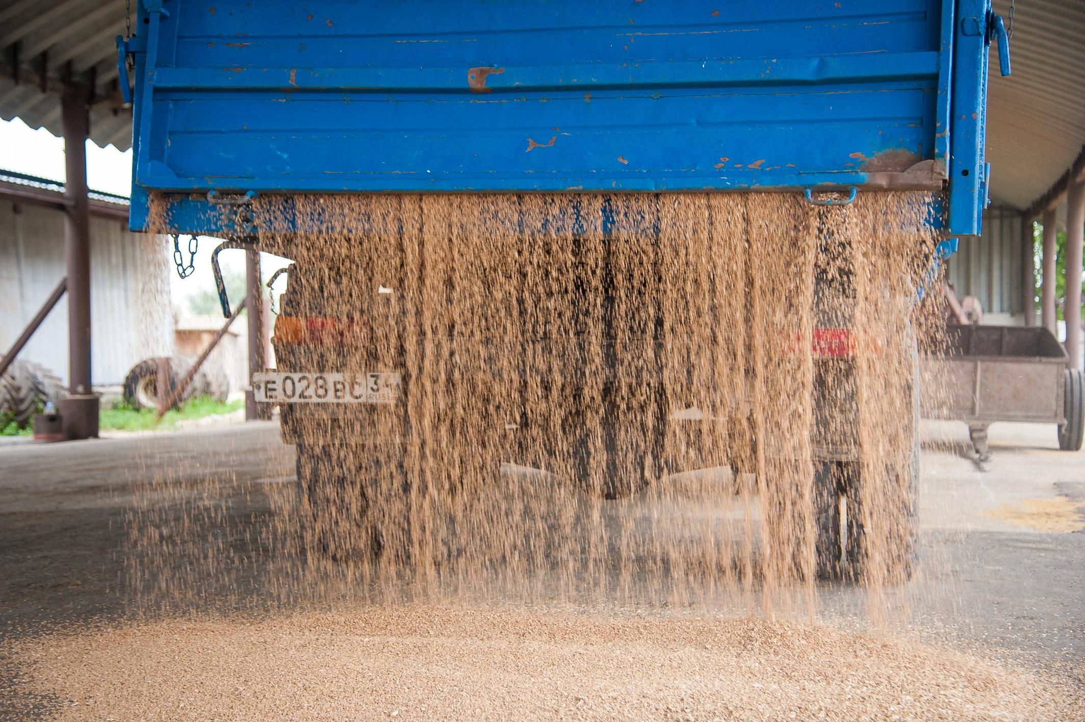 Волгоградские аграрии собрали больше 3,5 млн. тонн зерна
