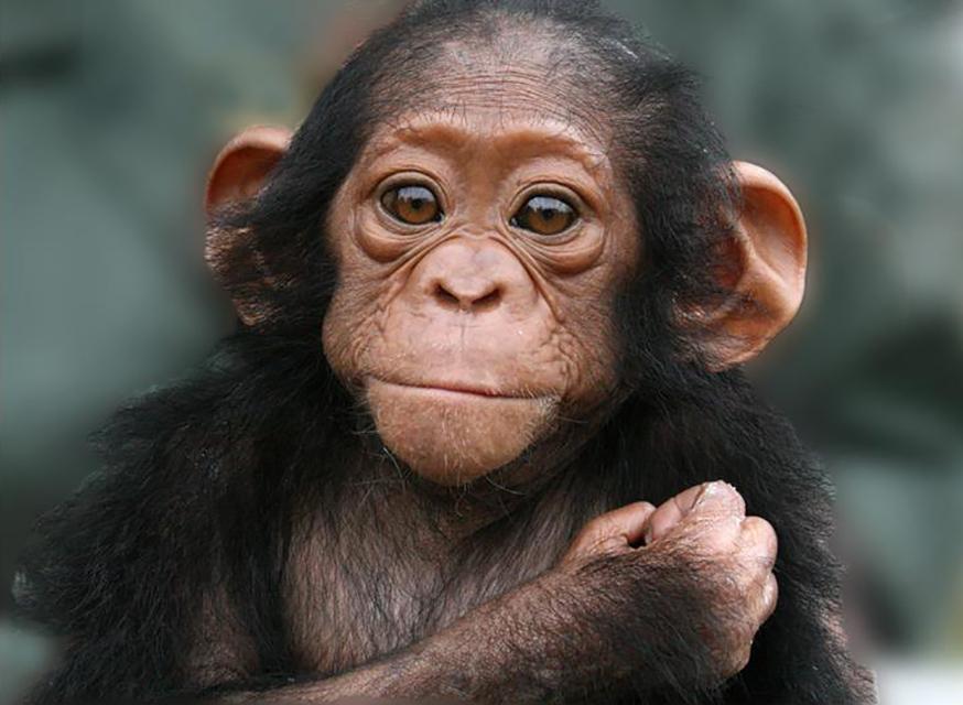 Ученые выяснили, что люди легко поддаются «влиянию среды»