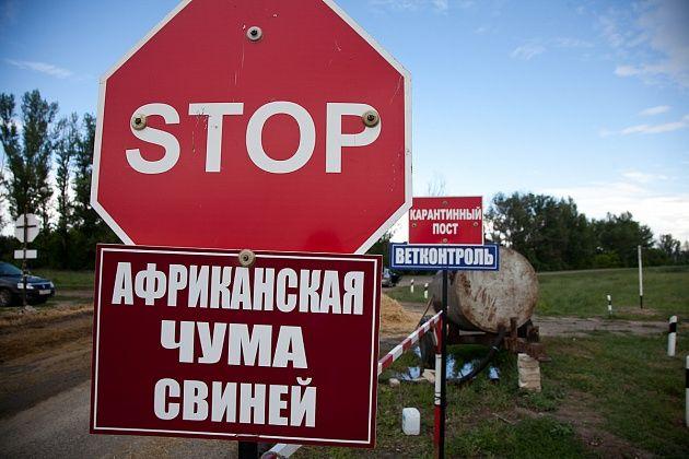 Из-за чумных кабанов вВолгоградской области закрыли охотничий заказник