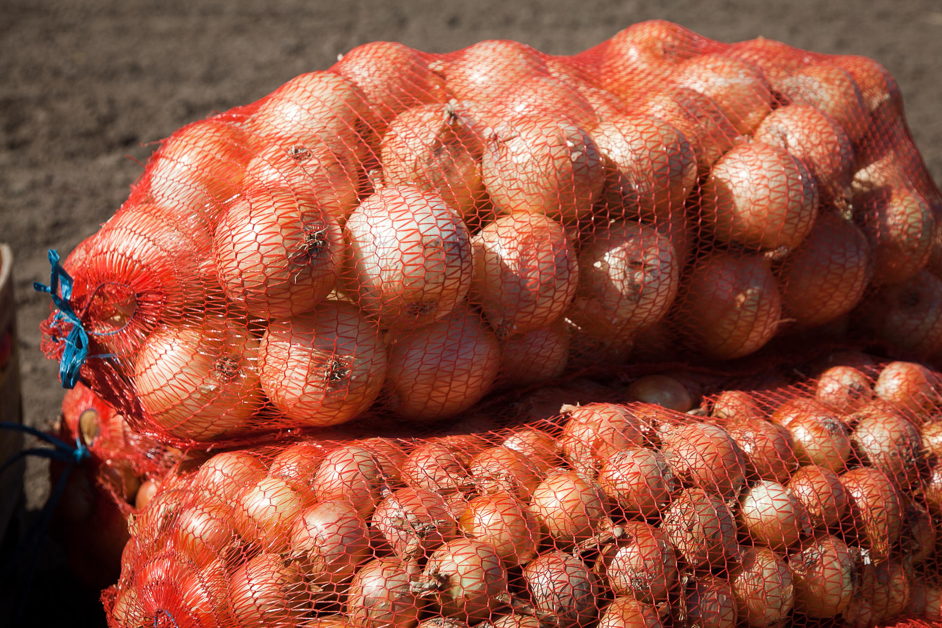 Овощехранилища Волгоградской области вмещают 200 тыс. тонн сельхозпродуктов