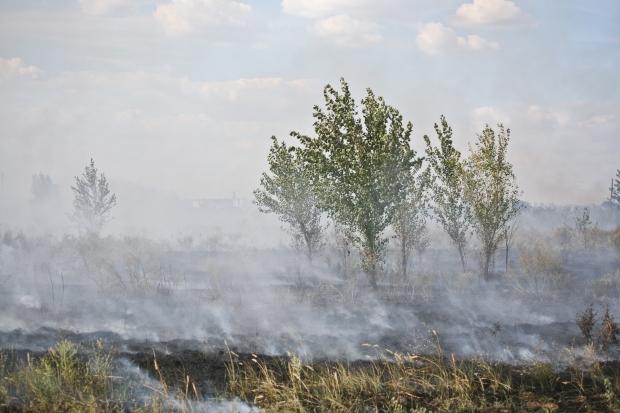 МЧС: неменее 700 человек эвакуировали из-за пожаров вВолгоградской области